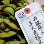 丹波篠山の黒大豆枝豆